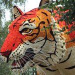 Bloemencorso van Loenhout : Tijger