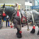 Historische optocht van Gemert : Paard
