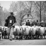 Historische optocht van Boerenbondsmuseum Gemert 2015